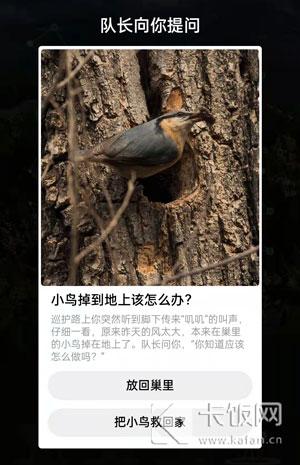 小鸟掉到地上该怎么办